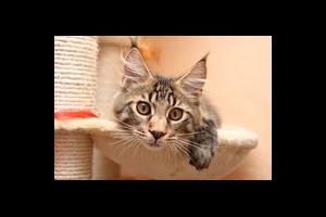 Read more about the article Malpropreté urinaire liée à l'environnement du chat
