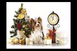 Read more about the article Décors de fêtes : éviter les dangers pour nos animaux domestiques
