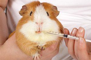 Read more about the article Le vétérinaire a prescrit un traitement antibiotique à mon animal