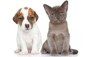Les conditions de vente des animaux domestiques