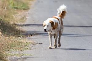 Read more about the article Que dois-je faire si je trouve un animal errant ?