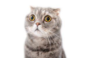 Mon chat a les yeux qui coulent…