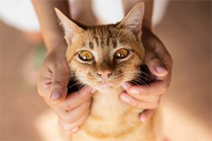 Read more about the article L'hyperthyroïdie chez le chat
