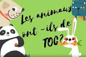 Les animaux ont-ils des TOC ?  (Texte et vidéo)